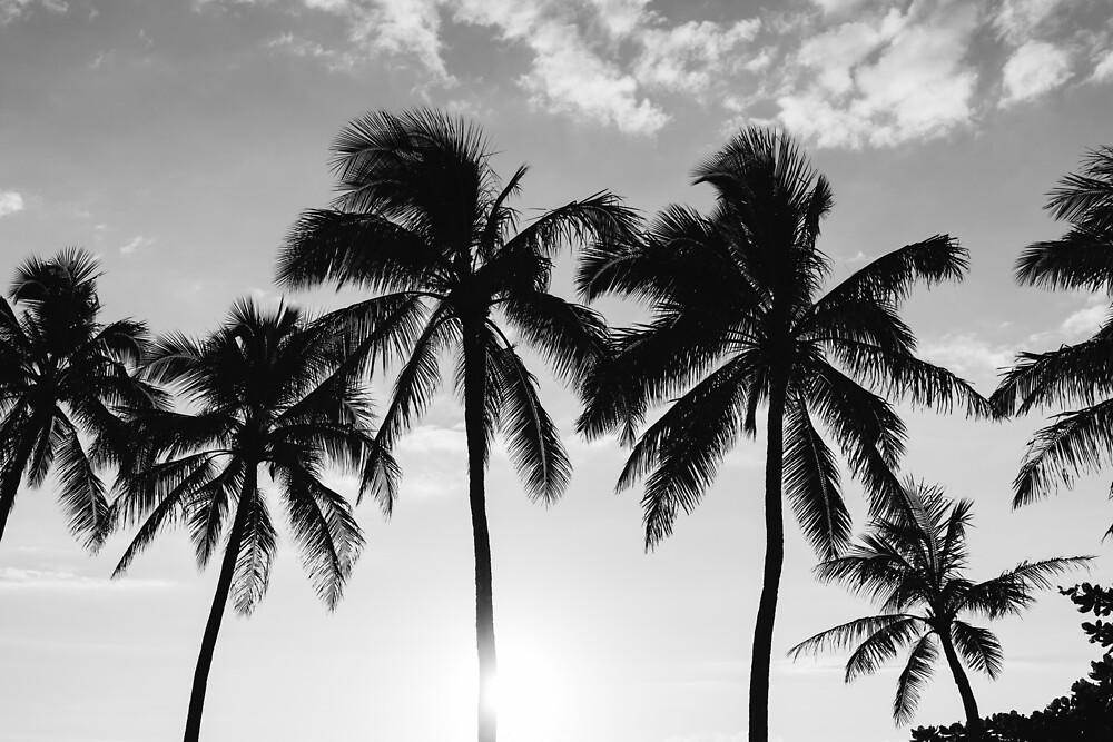 Hawaiian Palms III by Bethany Young