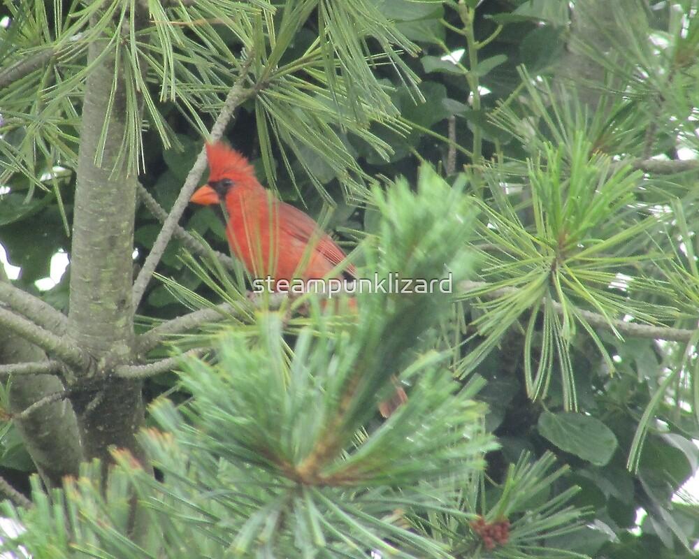 Cardinal by steampunklizard