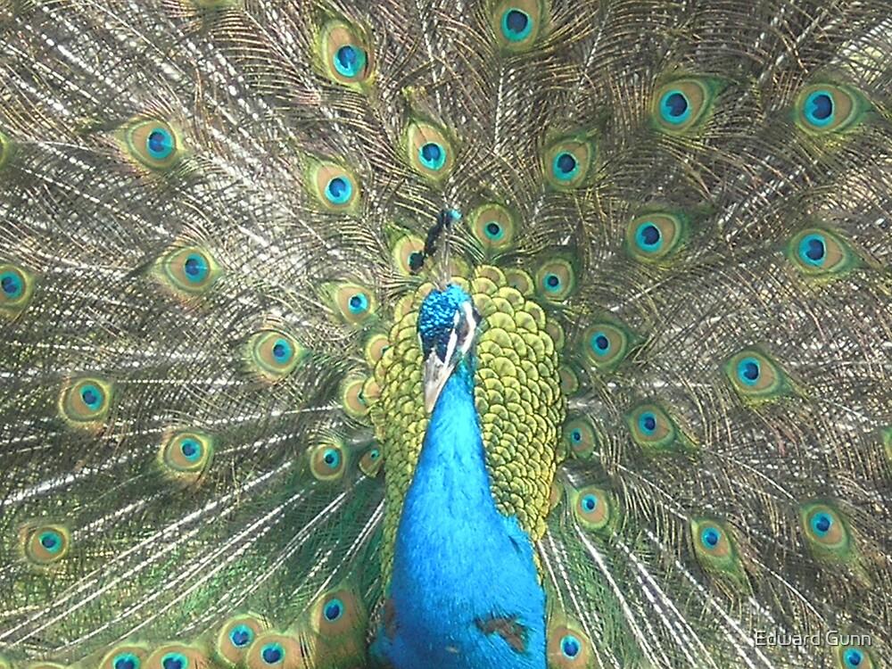 Peacock Blue by Edward Gunn