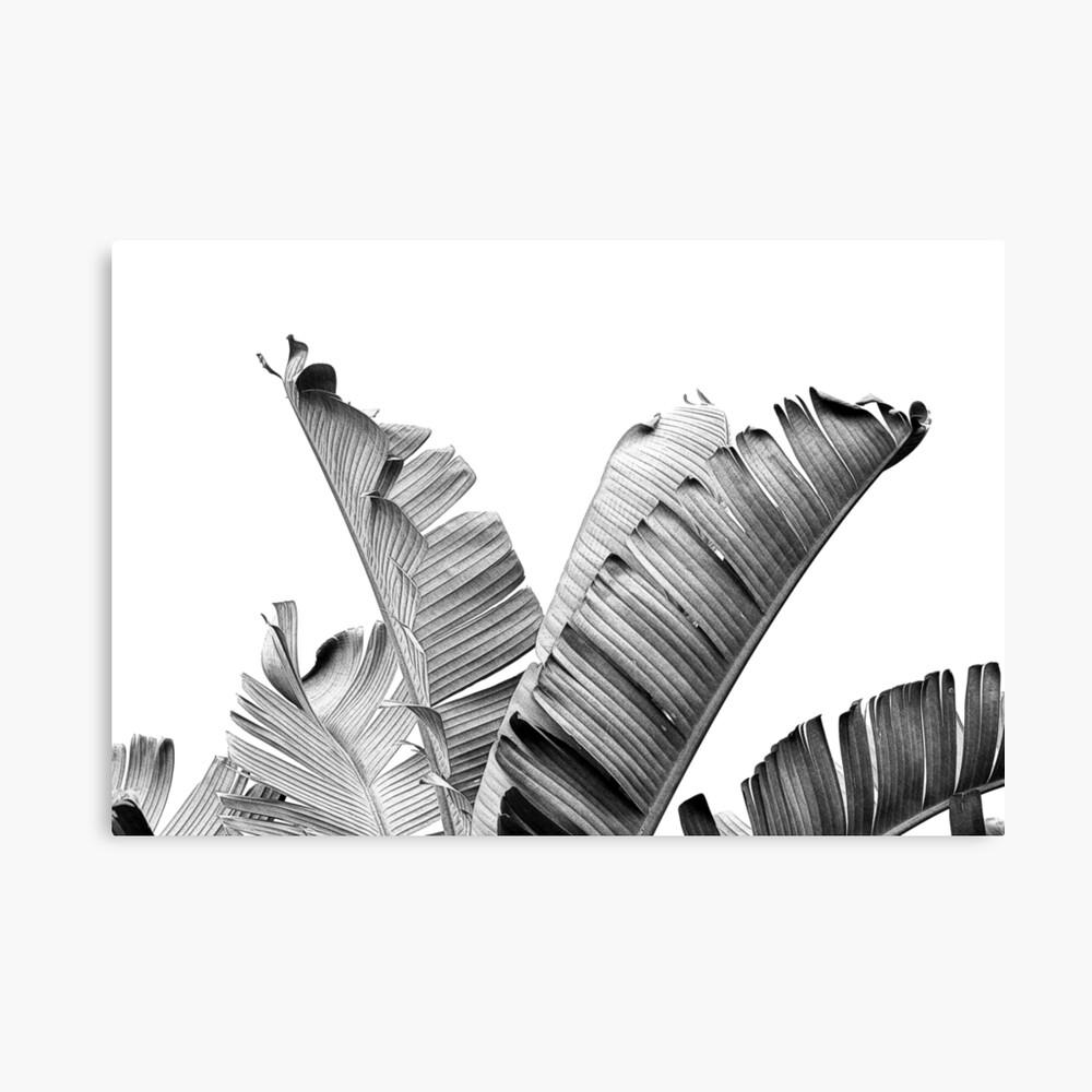 BANANA BLÄTTER Black & White Leinwanddruck