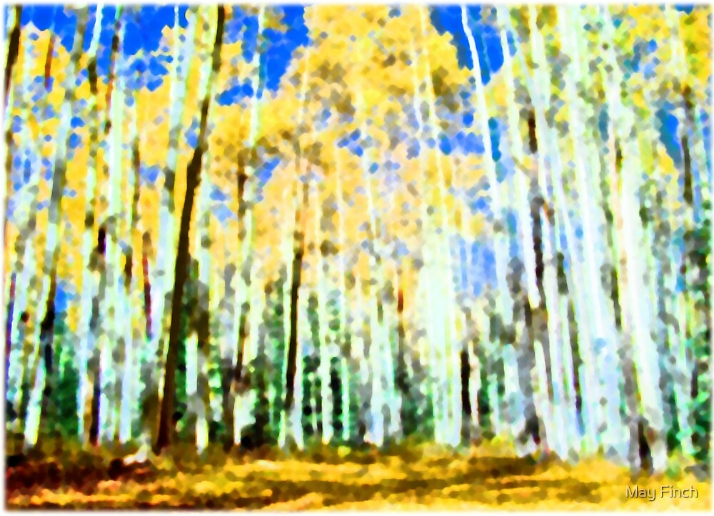 Aspen Trees in the Fall by May Finch