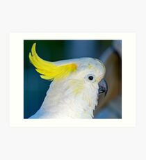 Sulphur-crested Cockatoo Art Print