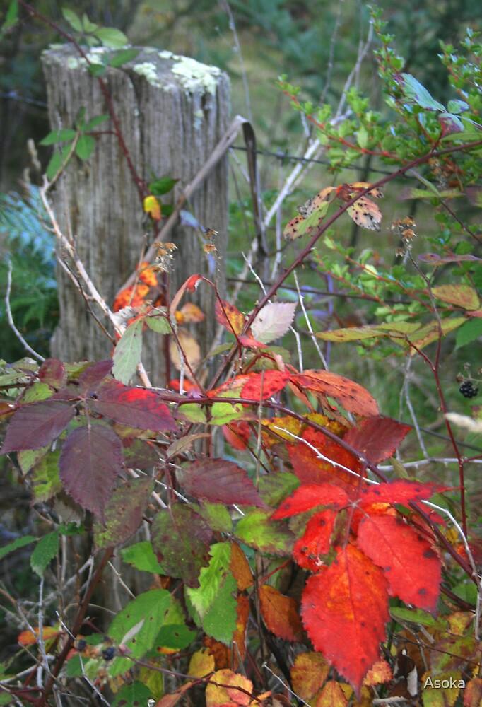 Blackberry Autumn by Asoka