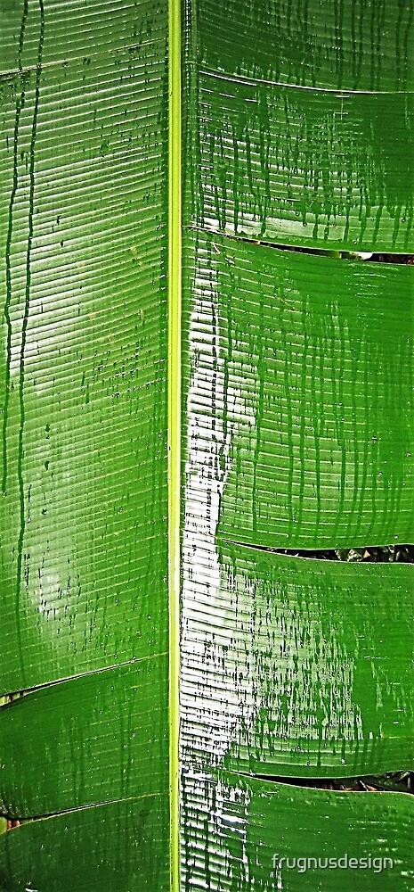 Amazon leaf by frugnusdesign