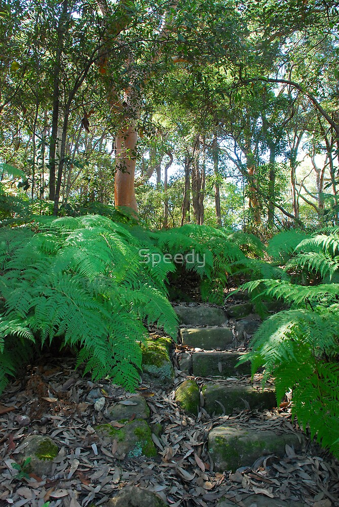 Sydney Bushland track with steps by Speedy
