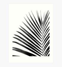 PALMENBLATT Black & White Kunstdruck