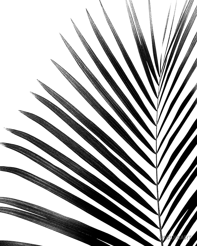 PALM LEAF Black & White by NORDIKART