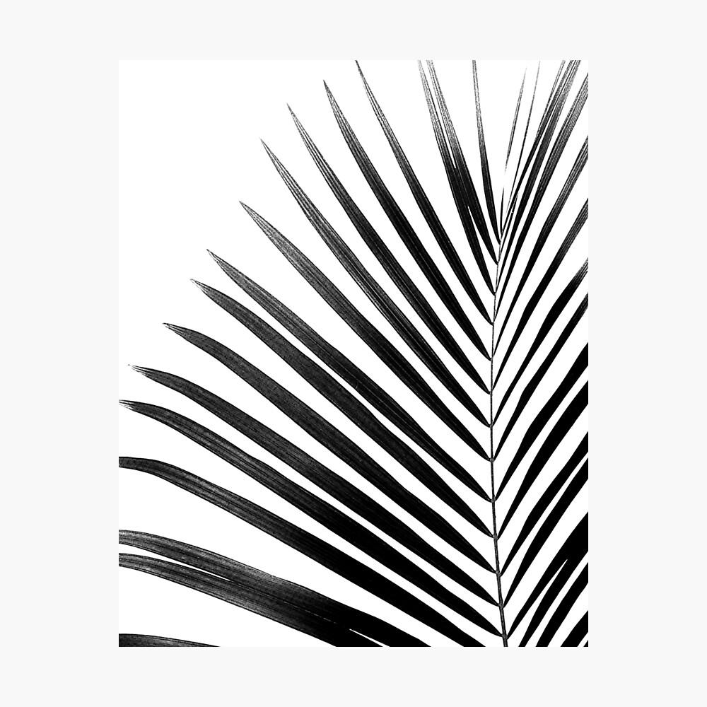 Palm leaf black white photographic print