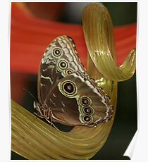 Butterfly on glass Poster