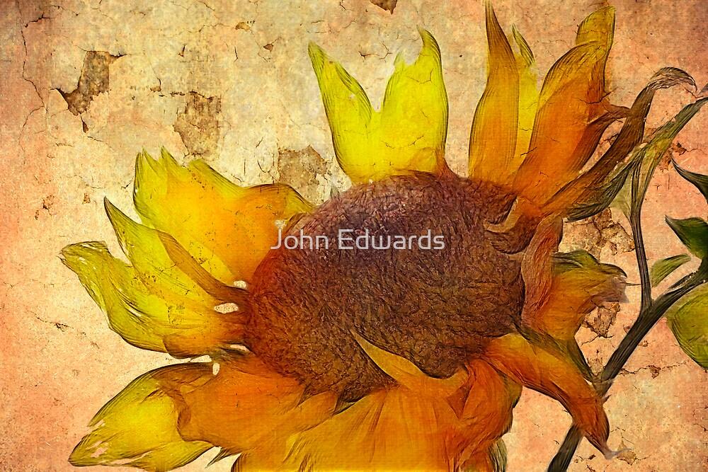 Helianthus by John Edwards