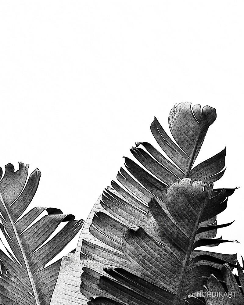 BANANA LEAF Black & White by NORDIKART