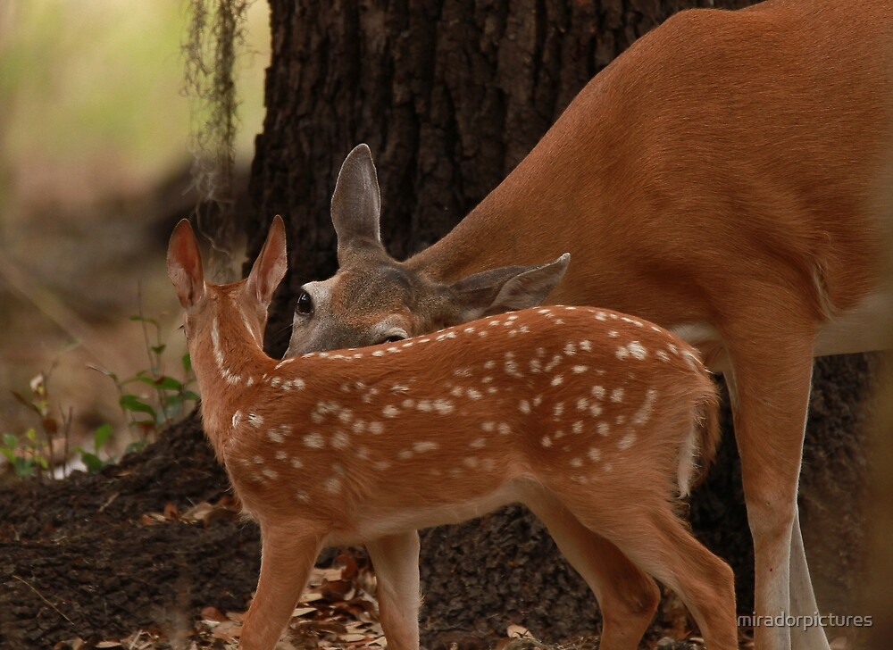 Mother and baby by miradorpictures