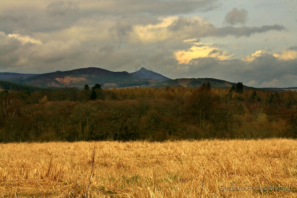 Bennachie from a Distance by Suzanne Forbes-Murray
