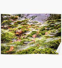 Inverness Morning Webs, Scotland. Poster