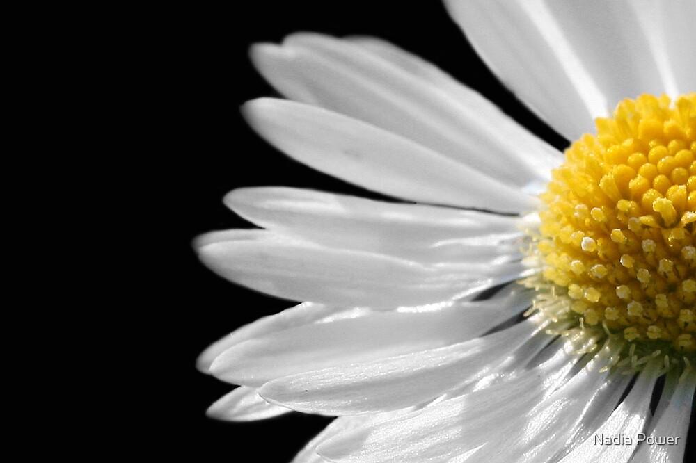 Summer's Daisy by Nadia Power