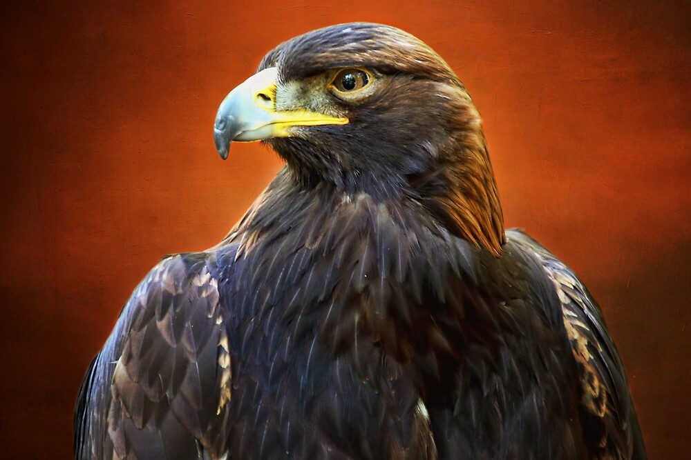 Golden Eagle by Peggy Collins