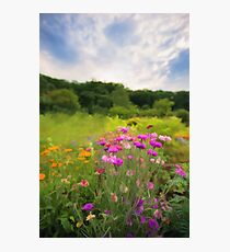 Cornflower mood  Photographic Print
