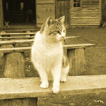 Oscar The Plantation Cat by GQ1NYC