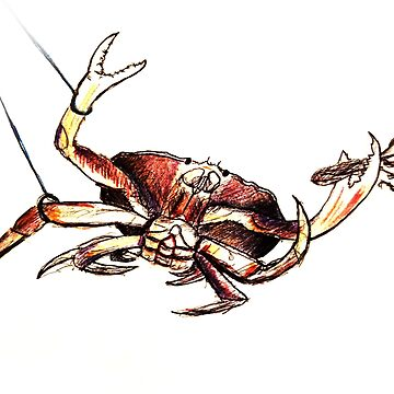 Dungeness Crab Snared by MERCH365