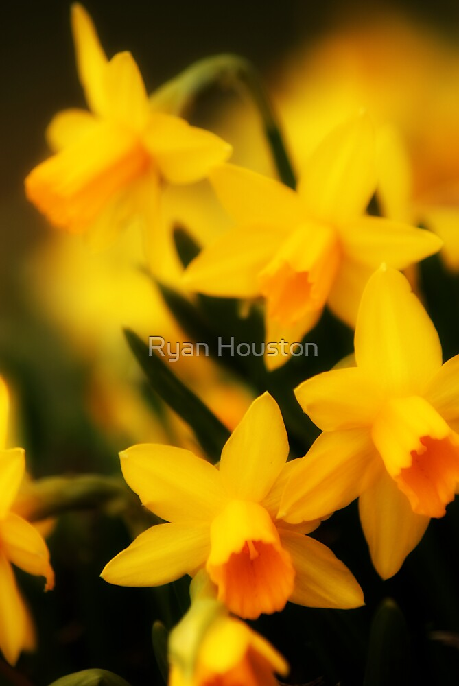 Kneeling Narcissus by Ryan Houston