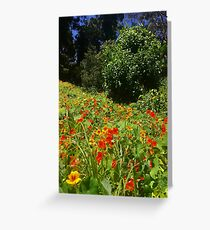 Wild Flowers in Stern Grove Greeting Card
