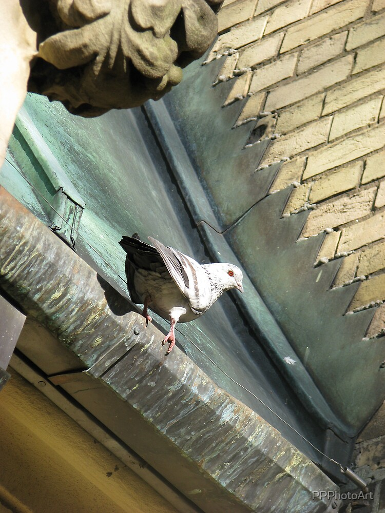 pigeon on the roof by PPPhotoArt