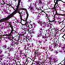 Blossom st Albans by Terence J Sullivan