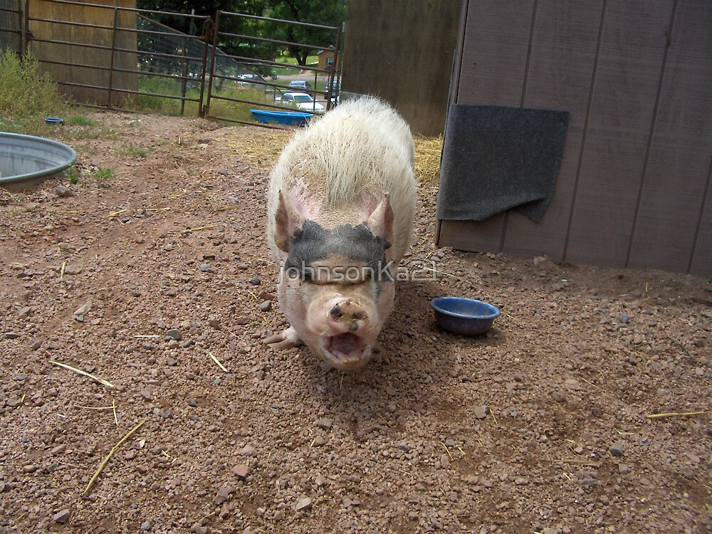 Crazy Pig by johnsonKa21