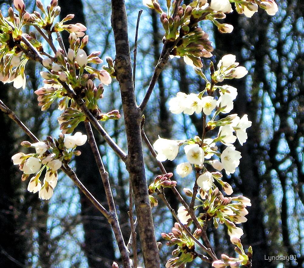 In Bloom  by Lyndsay81
