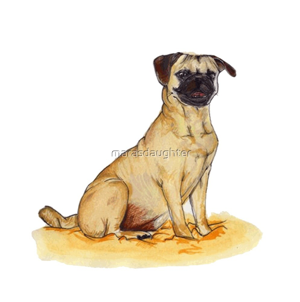 pug color drawing by marasdaughter