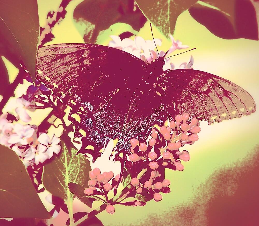 Butterfly by Kristie King