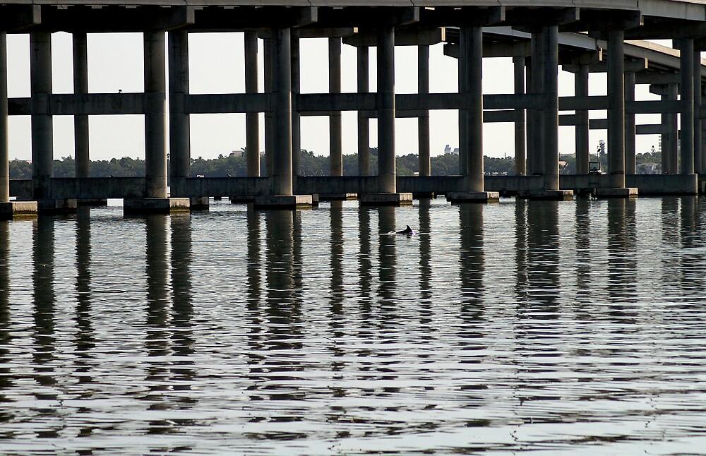 Dolphin Under Causeway by julez113