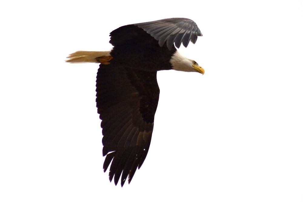 Soar like an Eagle by Minivillage
