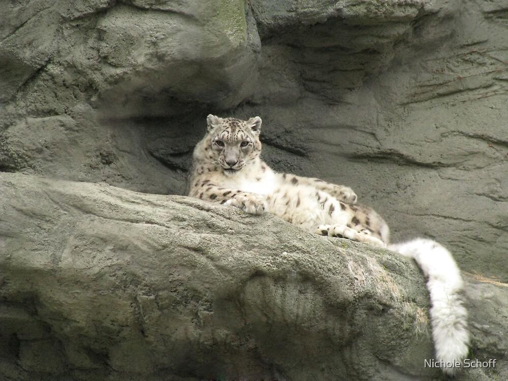 Snow Leopard by Nichole Schoff