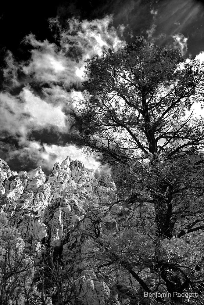 La Madre Treescape by Benjamin Padgett