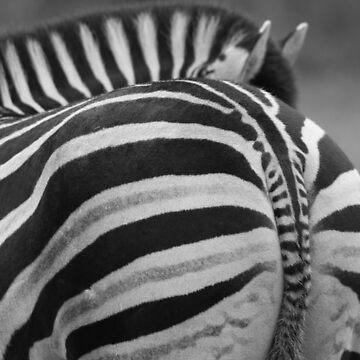 Zebra Tales by jgregor