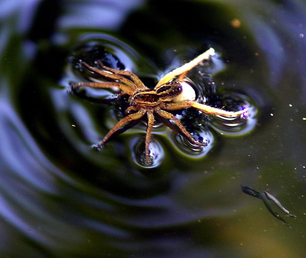 Mama Spider Swimming by julez113