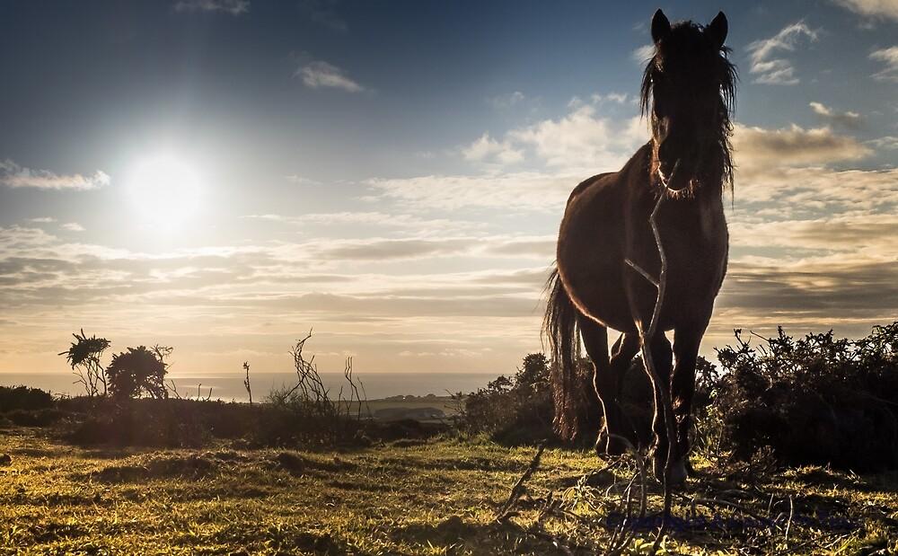 Wild ponies at Chapel Carn Brea.Cornwall. by jimmybates