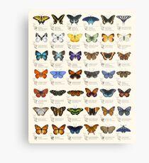 Schmetterlinge von Nordamerika Metallbild