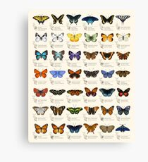 Butterflies of North America Canvas Print