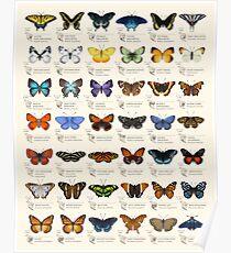 Schmetterlinge von Nordamerika Poster