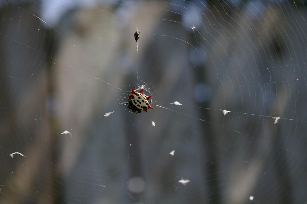 Crab Spider by julez113