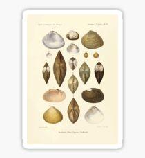 Études sur les mollusques terrestres et fluviatales du Mexique et du Guatemala  par Mm P Fischer et H Crosse 1902 068 Sticker