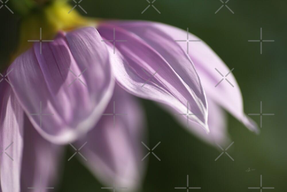 Beautiful Soft Tree Dahlia In Flower by Joy Watson