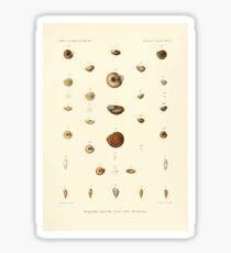 Études sur les mollusques terrestres et fluviatales du Mexique et du Guatemala  par Mm P Fischer et H Crosse 1902 069 Sticker