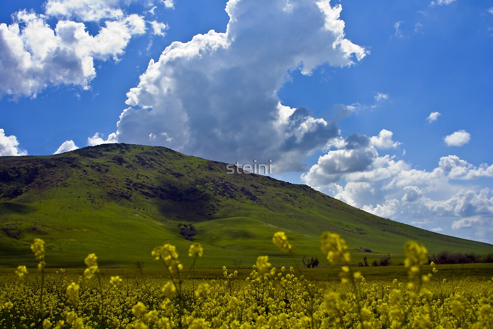 Yellow by steini