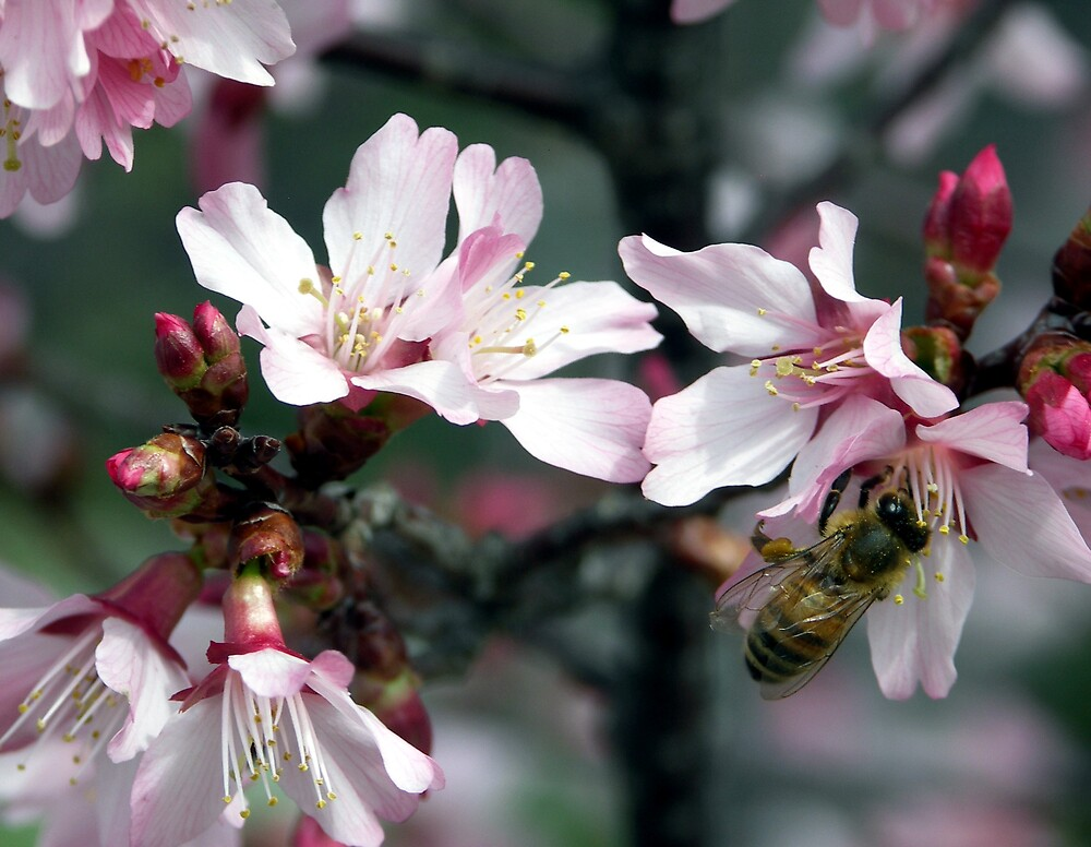 Bee and Blossoms by Marilyn Jones