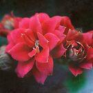 Hidden beauty - Succulent bloom by Karen  Betts