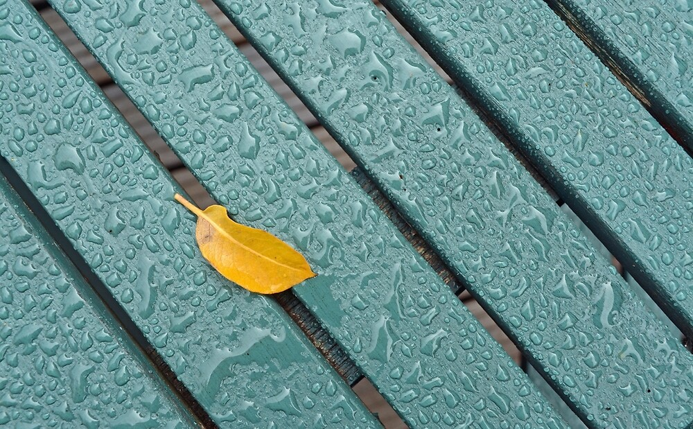 After The Rain by Alexandra Lavizzari