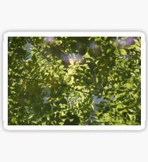 Leaves Reflection, Chernobyl Sticker